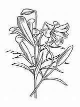 Coloring Lily Flower Pages Flowers Easter Pad Lilies Drawing Printable Adults Getdrawings Recommended Colors Getcoloringpages Mycoloring sketch template