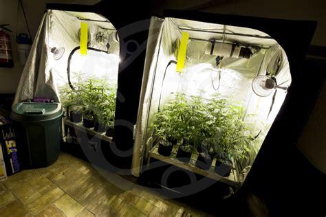 chambre culture indoor bases essentielles pour culture de cannabis en intérieur