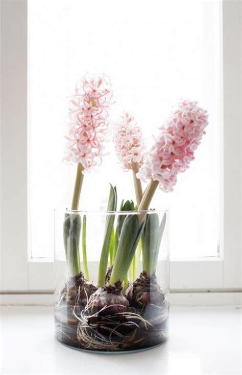 les jacinthes comme d 233 coration de printemps