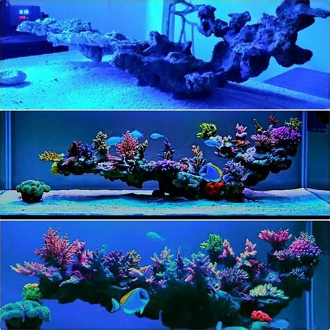 Live Rock Aquascaping Ideas by This Live Rock Insert Saltwater Aquariums
