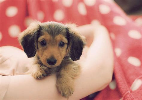 puppy pictures dogs images puppy hd wallpaper and background photos 34212463