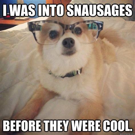 Pomeranian Meme - the 25 best pomeranian memes ideas on pinterest cute funny animals pokemon effectiveness and