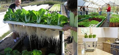 Diy Beginner Aquaponics Projects