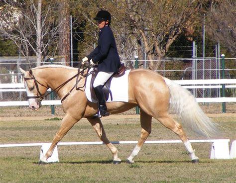 horse quarter horses breeds