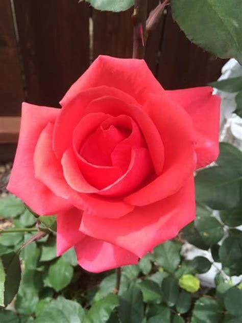 beautiful flower dps whatsapp images