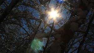 Sun Beams In Mystical Winter Forest. Stock Footage Video ...