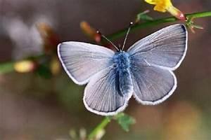 ShangralaFamilyFun.com - Shangrala's Beautiful Butterflies!