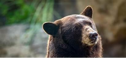 Bears Bear Habitat Zoo