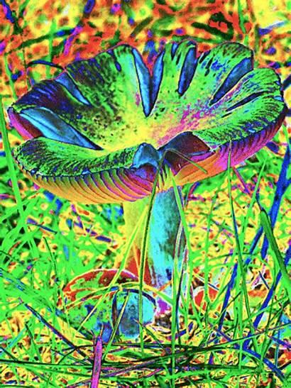 Trippy Mushroom Weed Mushrooms Trip Lsd Magic