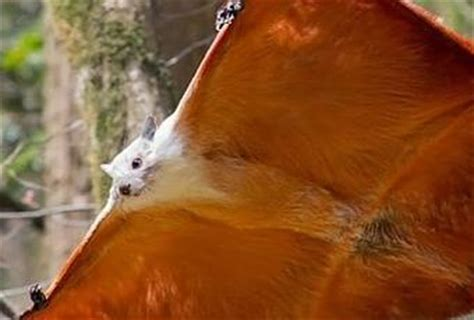 The World s Top 10 Most Unusual Flying Animals Paperblog