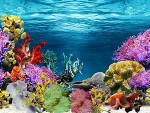 Single Side Aquarium Fish Tank Decorative Wall Background