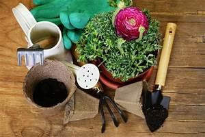 Wann Schneidet Man Rosen Zurück : ranunkel pflanzen von standort bis bl tezeit ~ Orissabook.com Haus und Dekorationen
