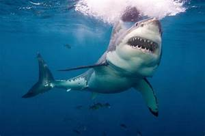 Brit surfer Darren Mills punches Great White shark to ...