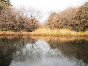 Off the Beaten Dori: Institute for Nature Study – Nature ...