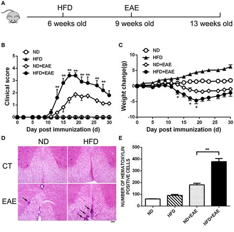 frontiers obesity promotes eae  il   ccl