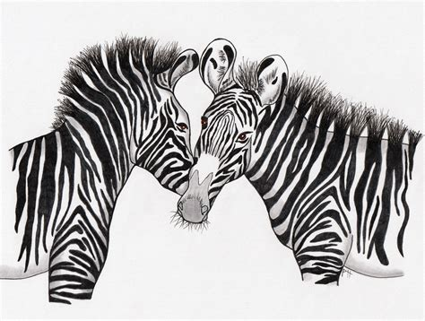 drawing archives zebra