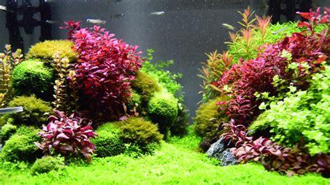 Setup Aquascape by Aquascape Planted Aquarium With Seiryu