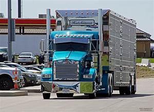 Kenworth custom T800 bull hauler | Semi Trucks & Trailers ...