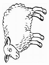 Lamb Coloring Pages Animals Print Printable Recommended Colors Mycoloring sketch template