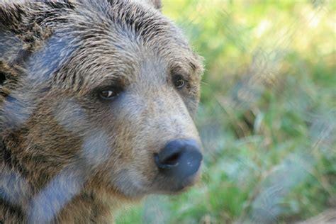 sad animals zoo zoos bear myth