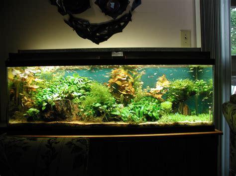 Very Small Kitchen Design Ideas - 1000 images about aquariums on pinterest aquarium home aquarium and pictures of fish