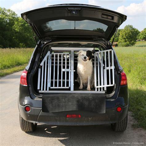 hunde  bord  werden hunde sicher im auto transportiert