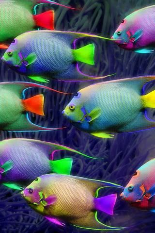 Animated screensavers fantastic iphone fund in 2020. Very Nice Iphone Fish Wallpaper ~ Wallpaper & Pictures