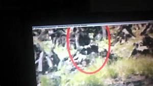 Proof that leprechauns exist ? - YouTube