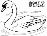Swan Coloring Pages Print Colorings sketch template
