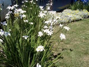Fake Plants Home Decor Image