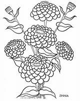 Coloring Zinnia Flower Drawing Flowers Tulip Silhouette Qisforquilter Goodall Jane Getdrawings Drawings Getcolorings Printable Designlooter Quilter Finds Children Colouring 39kb sketch template