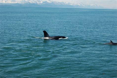 6/28 Juneau, Alaska (whale Watching
