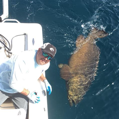 grouper much weigh does fishing average boat groupers fin fly they water