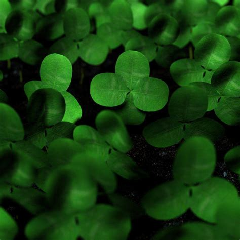 Clover Background Four Leaf Clover Wallpapers Wallpaper Cave