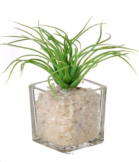 plante grasse artificielle succulente cact 233 e pot verre et cailloux blanc du site artificielles