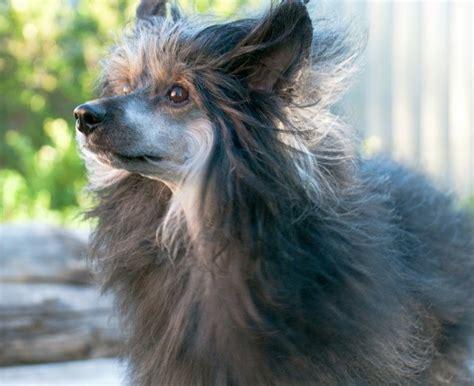remedies  hair loss  dogs thriftyfun