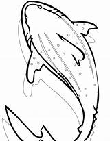 Shark Coloring Whale Pages Leopard Printable Realistic Cool Drawing Clipartmag Getdrawings Getcolorings Bestcoloringpagesforkids Template Modest sketch template