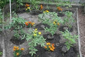 Mischkultur Im Garten : teil3 nat rliche mittel statt chemie gesunde pflanzen durch sinnvolle nachbarschaften ~ Orissabook.com Haus und Dekorationen