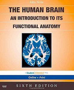 the human brain nolte online dating
