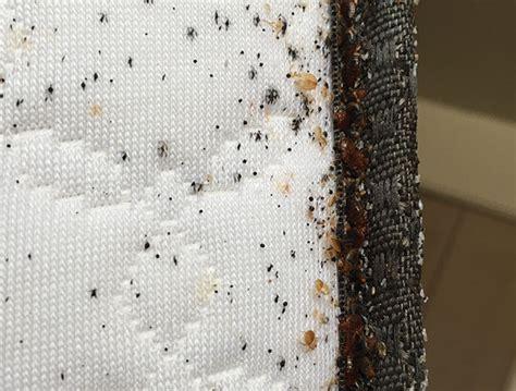 bed bug mattress encasement bed bugs do mattress encasements help pest management
