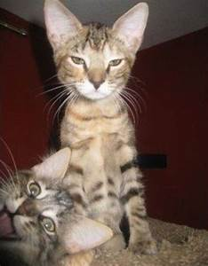 The 39 funniest animal photobombs of all time