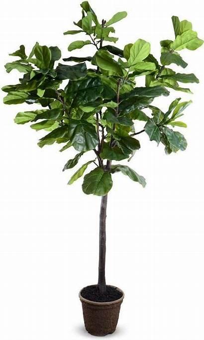 Plants Insidestores Pots