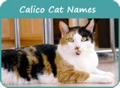 names for calico cats good names for female calico cats
