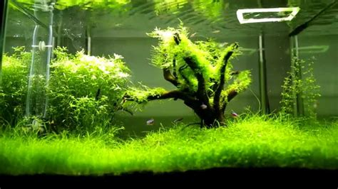 Aquascape Tree by Aquascape Tree Of 2014