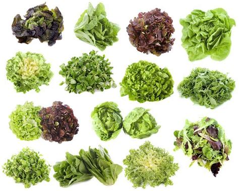types of lettuce top 10 tips on how to grow lettuce top inspired