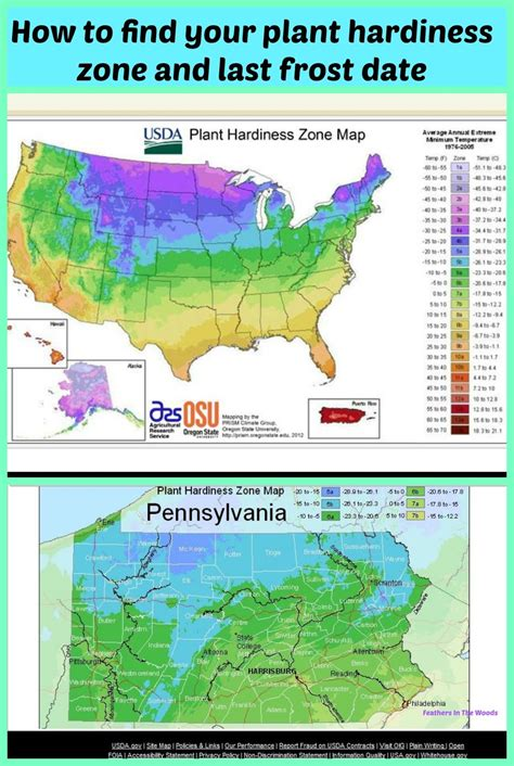 How To Find Out Your Hardiness Zone And Last Frost Date