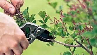 how to trim a tree the tree center