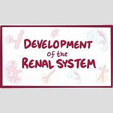 Development Of The Renal System  Osmosis Video Library