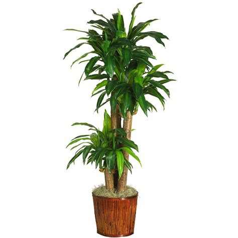 grow ls for indoor plants 12 best plants that can grow indoors without sunlight