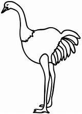 Avestruz Ostrich Coloring Colorear Dibujos Colorir Avestruces Desenho Pintar Sus sketch template